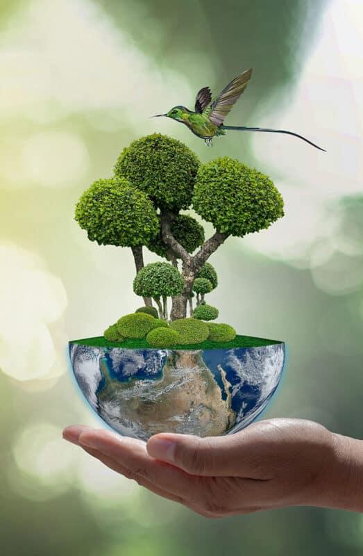 Kolibri Erde Nachhaltigkeit Achtsamkeit Steiner Kovarik